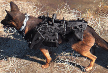 Black Armor for Dogmeat