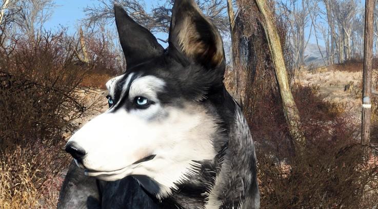 Dark Husky - Dogmeat